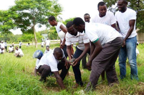 Article : Cinq milles arbres : enfin des espaces verts à Lomé ?
