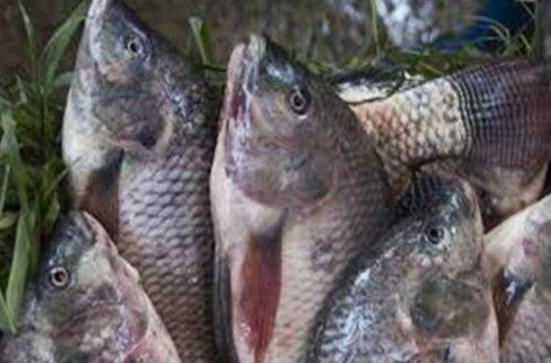 Article : Que de poissons dans « la Main de Dieu »